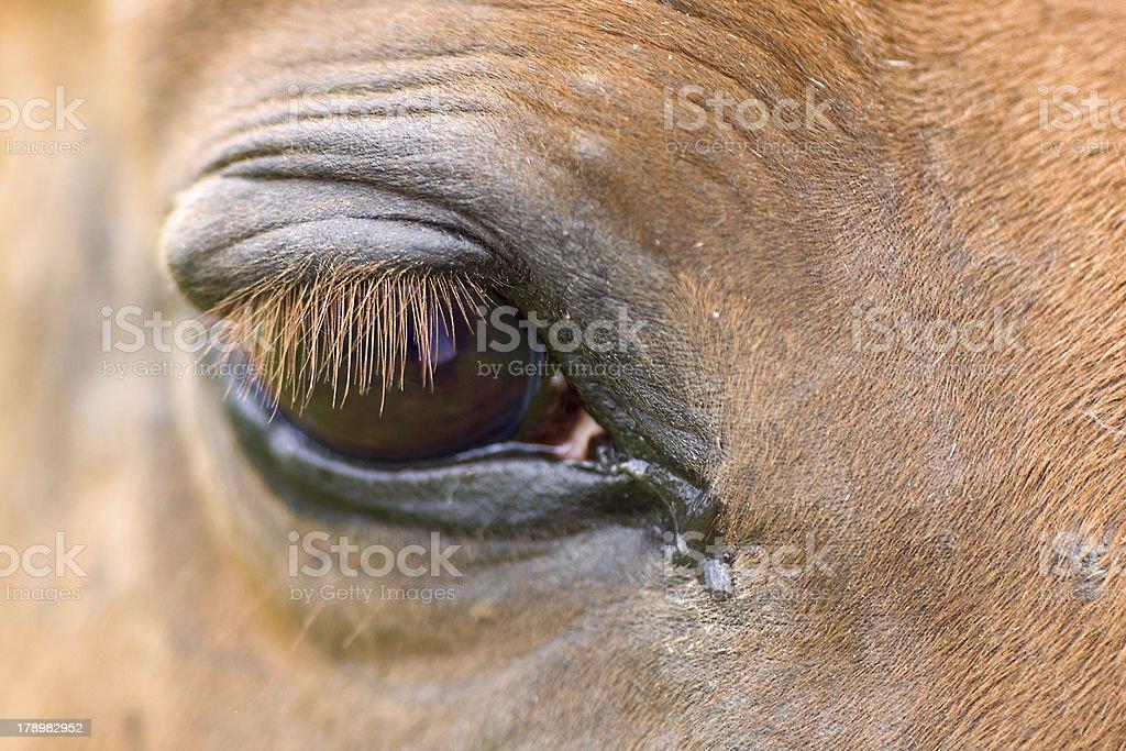 red horse'e eye royalty-free stock photo