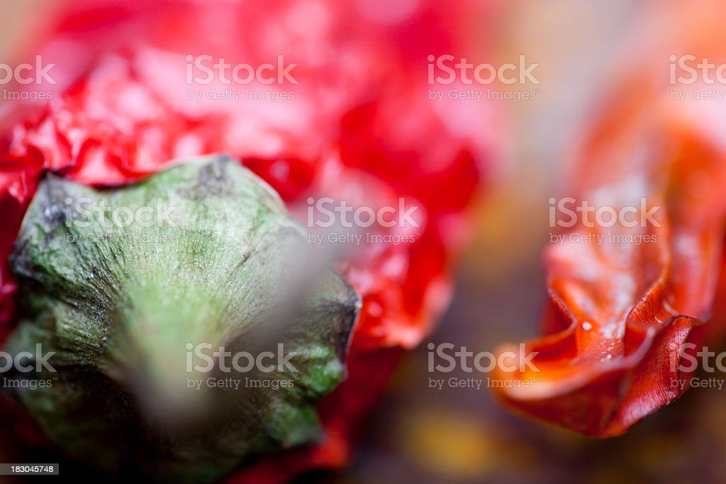 Red hot chili pepper suitable for seed stock photo