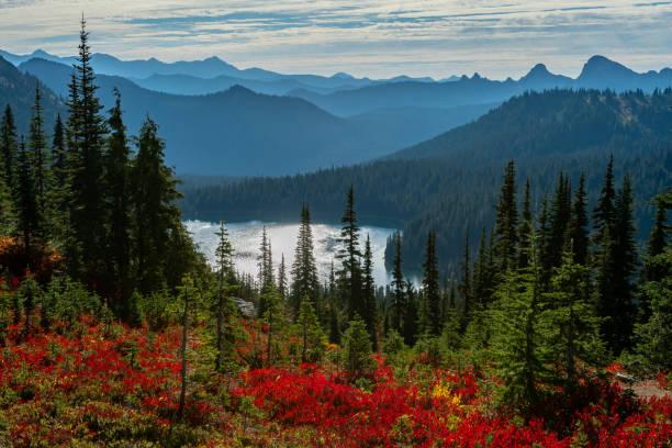 red huckleberry and pine trees in front of dewey lake - wybrzeże północno zachodnie pacyfiku zdjęcia i obrazy z banku zdjęć
