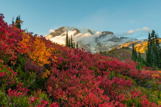 Red Huckleberry in Front of Mount Rainier stock photo
