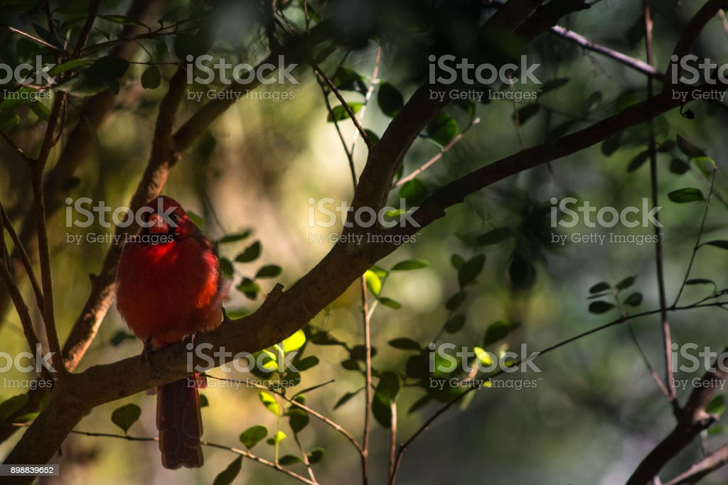 Red in Yellow stock photo
