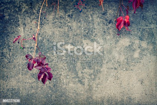 Autumn background of red leaves and rustic concrete wall with copy space.