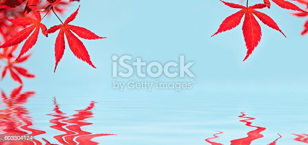 istock Red japanese maple leaves, water reflections 603304124
