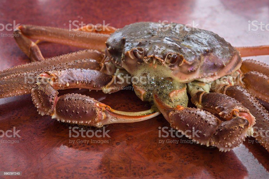 Red King Crab royaltyfri bildbanksbilder