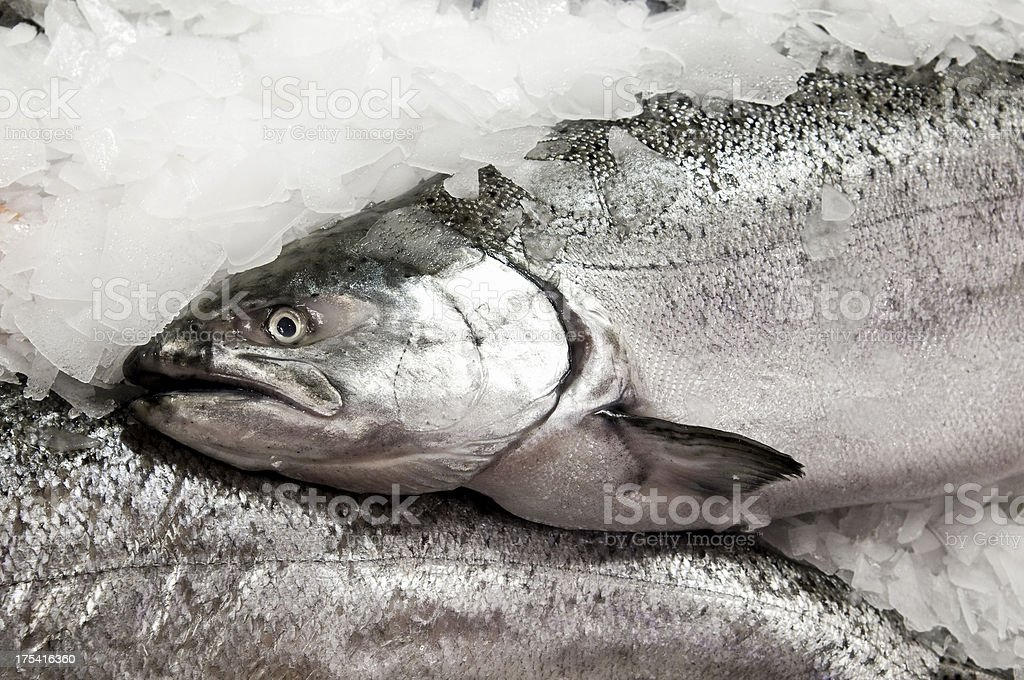 Red King salmon on ice stock photo