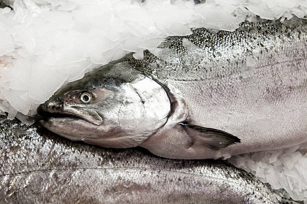 red king salmon on ice - chinook salmon stock photos and pictures
