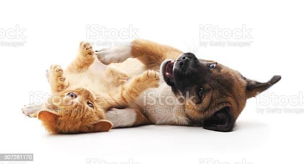 Red kitten and puppy picture id507281170?b=1&k=6&m=507281170&s=612x612&h=yw3gapzelngs qbnqcz98fpmxg 1yyb7pfvghrvwnmo=