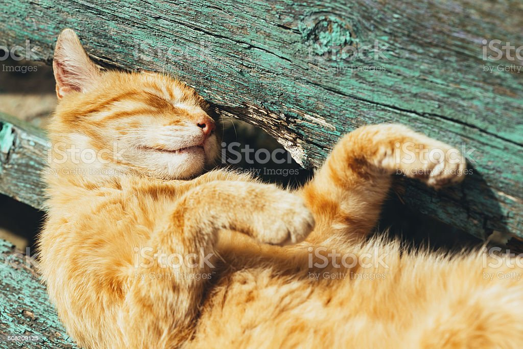 Red kitten cat sleeps on a bench in park stock photo