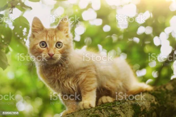Red kitten close up photo on tree on summer leafs picture id838962858?b=1&k=6&m=838962858&s=612x612&h=uqy4jjz7bsircrq5i1kpgu8doxktgbk81fw3n7swnq0=