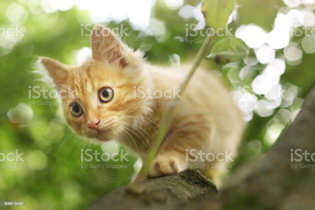 red kitten close up photo on tree on summer leafs stock photo