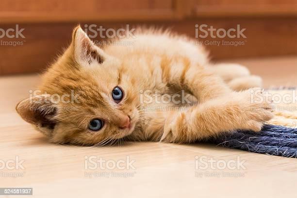 Red kitten ii picture id524581937?b=1&k=6&m=524581937&s=612x612&h=nr2jg5v vxizhpbiyxcabbegdidllw0dytqe6d5txz0=