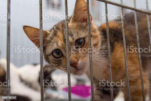 Red kitten in a cage arrives at the shelter pets picture id599716242?b=1&k=6&m=599716242&s=612x612&h=emlfxglwffa6ewoizvjtgxcjnbnillr zldypgtljku=