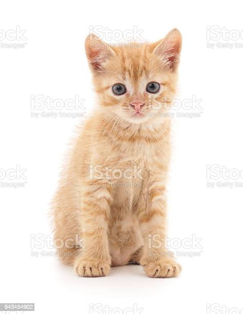 Red kitten picture id543454902?b=1&k=6&m=543454902&s=612x612&h=kjsmgugddufbnnxi7n3rg9vvpytmc xgym3tgck8ky4=