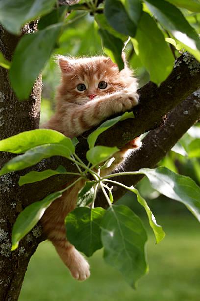 Red kitten picture id91779868?b=1&k=6&m=91779868&s=612x612&w=0&h=f jhgo5h og3q8g69d7djlyk67wkinawy18nusyxieg=