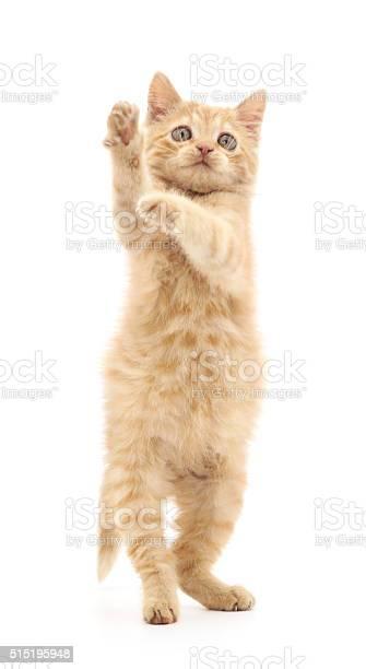 Red kitten played picture id515195948?b=1&k=6&m=515195948&s=612x612&h=dvjusqiktlku gpt qhv tujah9jtzebofnnxvzmk k=