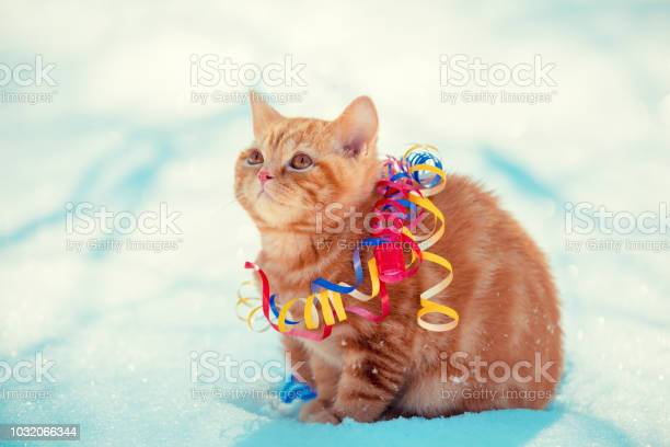 Red kitten wrapped in serpentine sitting outdoors on the snow in picture id1032066344?b=1&k=6&m=1032066344&s=612x612&h=z7i9rmf3uqv1 asnfa1p1ksyo5zswtsjm2yjyt5i4cc=