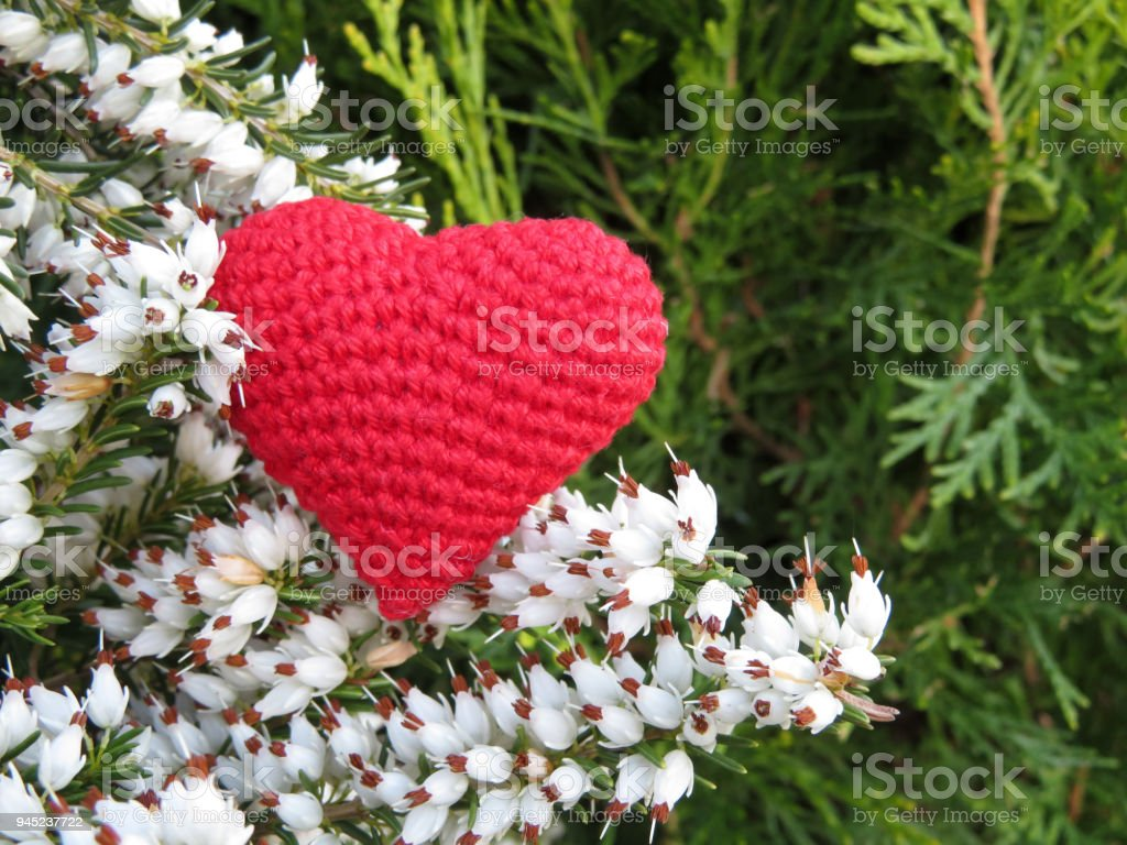 Red Knitted Heart And White Heather Flowers Stock Photo More