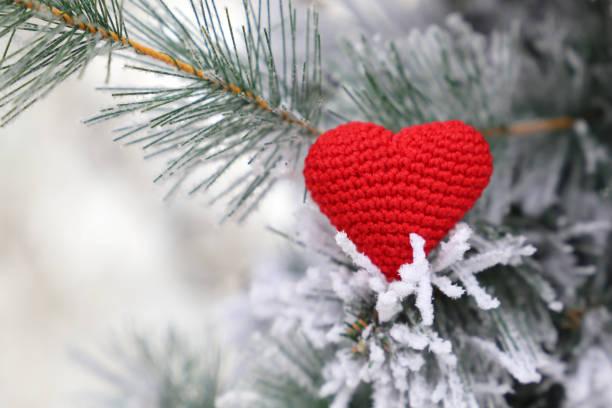 紅色編織的心在雪上的冷杉樹枝, 快樂聖誕賀卡 - 情人節 節日 個照片及圖片檔