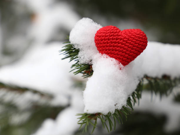 rotes gestricktes herz im schnee auf den tannenzweigen, winterwetter - weihnachtsspende stock-fotos und bilder