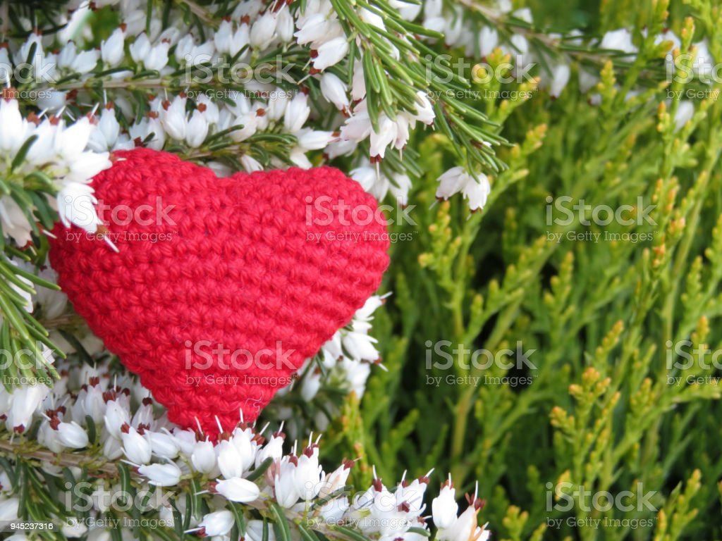 Red Knitted Heart On Background Of White Heather Flowers And Green