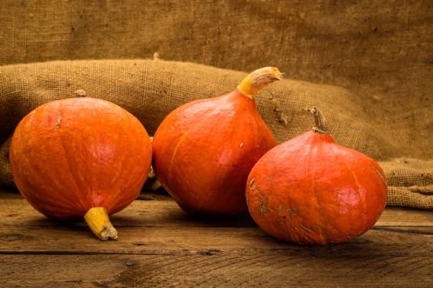 Red Kuri squashes stock photo