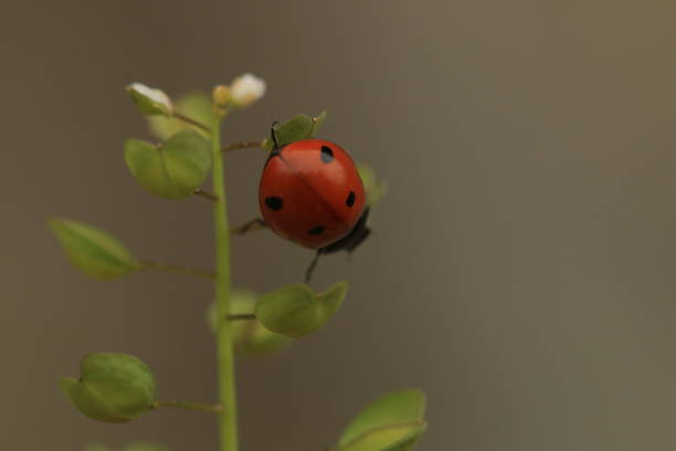 A red ladybird on top of the flower stock photo