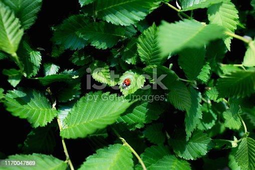 Natural floral background. Leaf texture.
