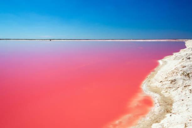 lagoa vermelha para produção de sal - laguna - fotografias e filmes do acervo