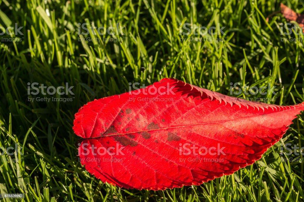 Rote Blatt und Herbststimmung – Foto