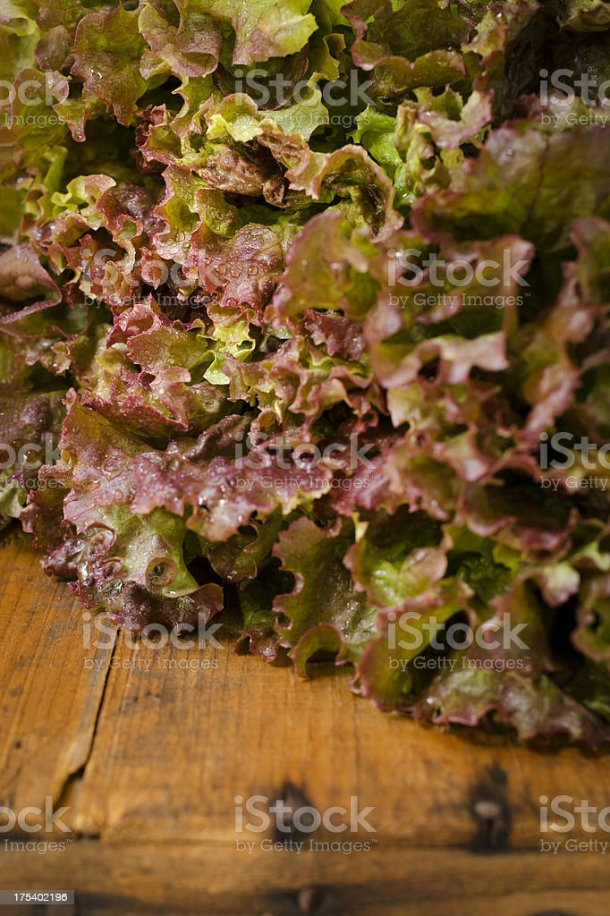 Red Leaf Lettuce Close-up Vertical stock photo