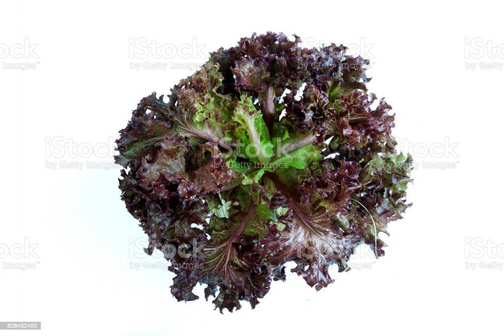 Légumes laitue feuille rouge - Photo