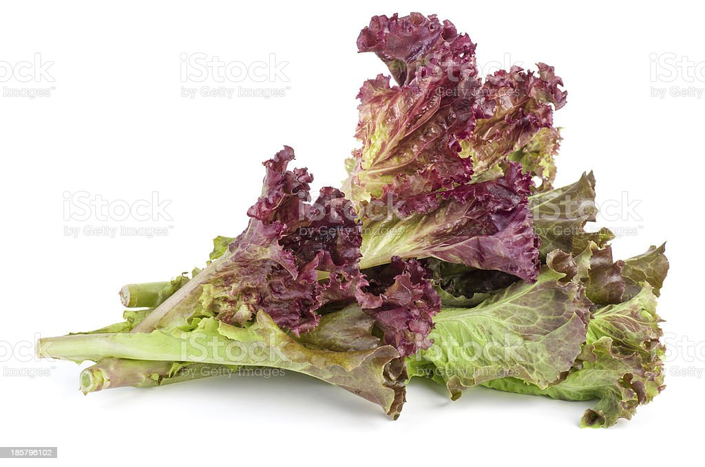 Red leaf lolo rosso lettuce stock photo