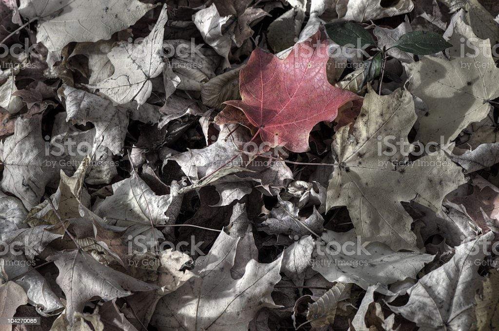 Rotes Blätter – Foto