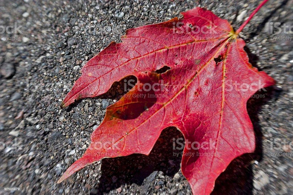 Rotes Blätter Lizenzfreies stock-foto