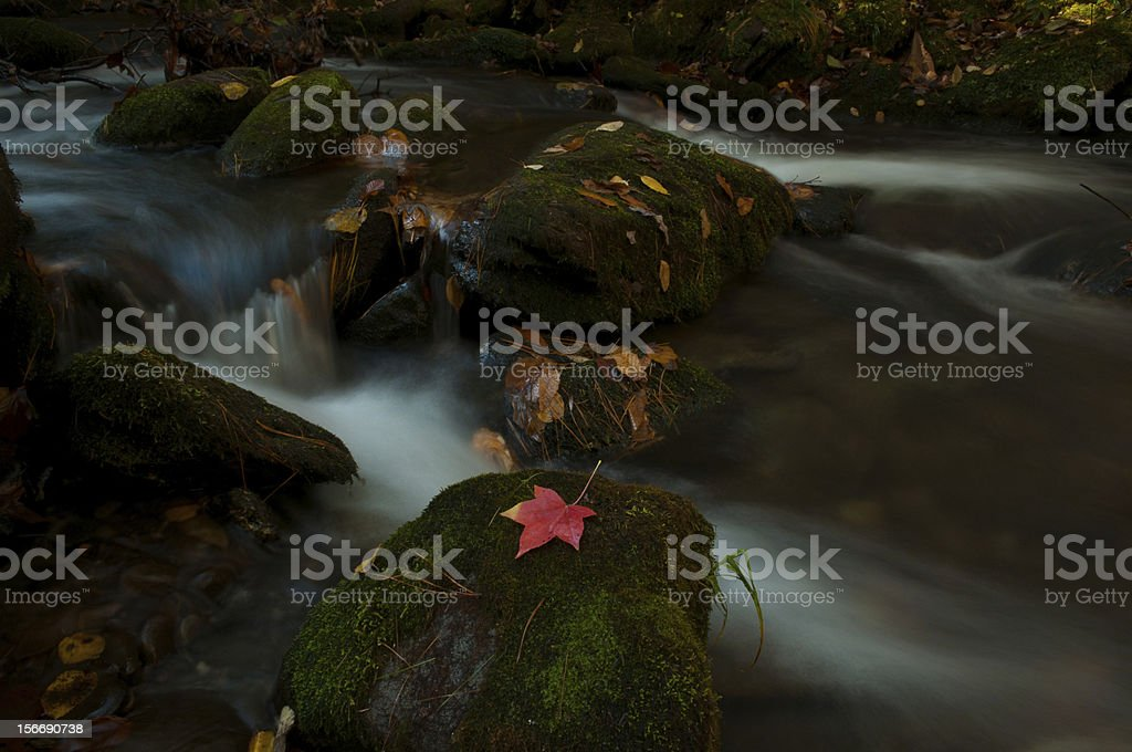 red leaf waterfall at Grotto Falls stock photo