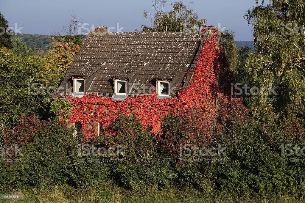 Foglie rosse copertina di un vecchio edificio foto stock royalty-free