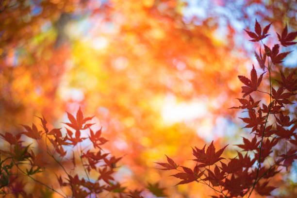 Rote Blätter im Herbst Hintergrund – Foto
