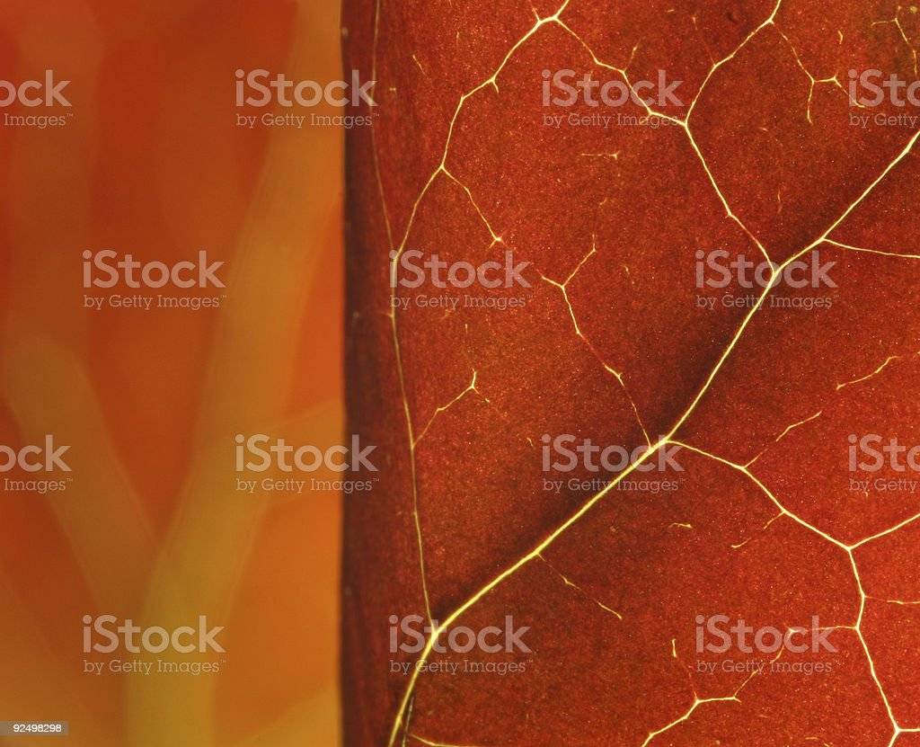 red leaves macro royalty-free stock photo