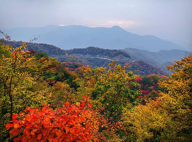 Red leaves, Berge und Straßen – Foto