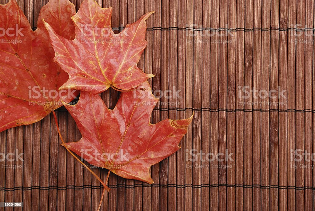 Red leaves on bamboo royalty-free stock photo