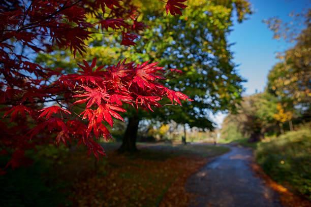 красные листья - rbg стоковые фото и изображения