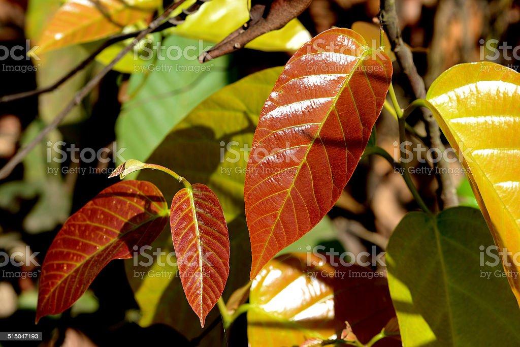 Red Leaves 免版稅 stock photo