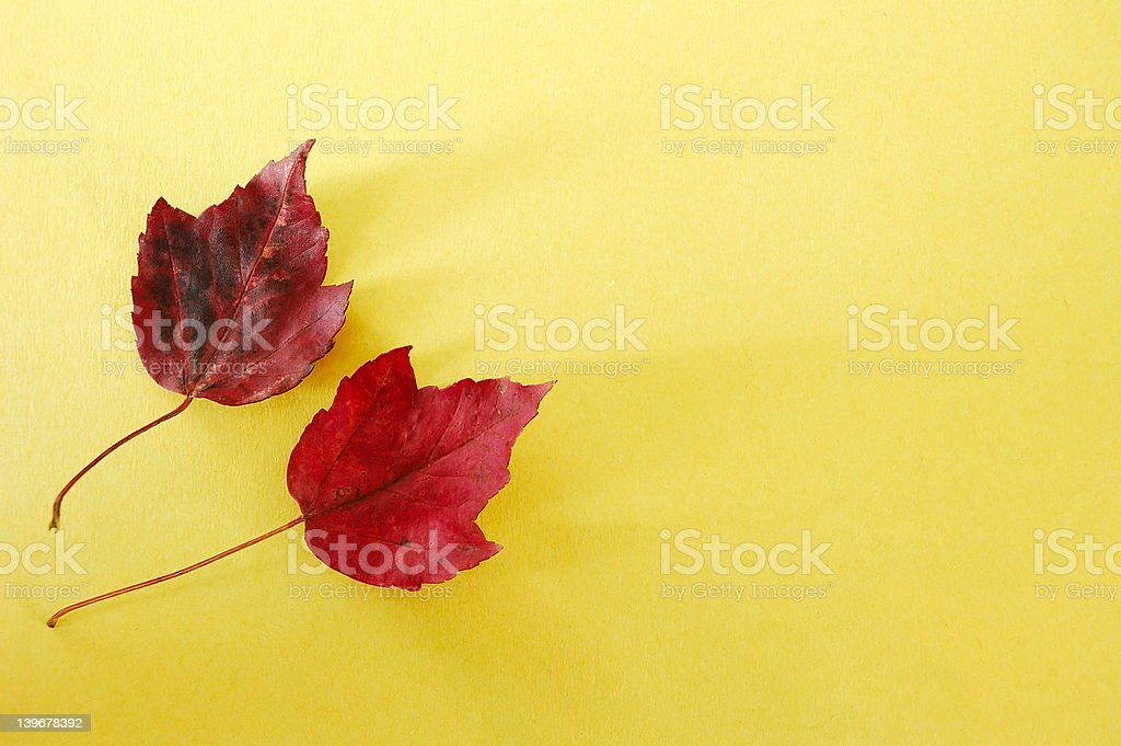 Red Leaves Yellow Paper royalty-free stock photo