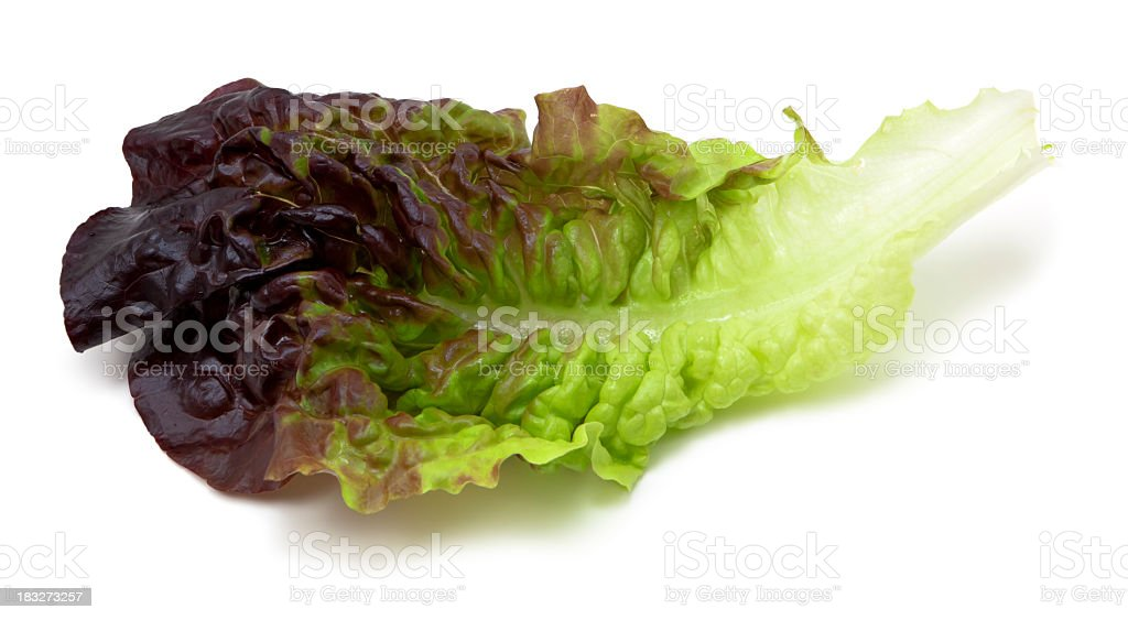 Red lettuce leaf stock photo