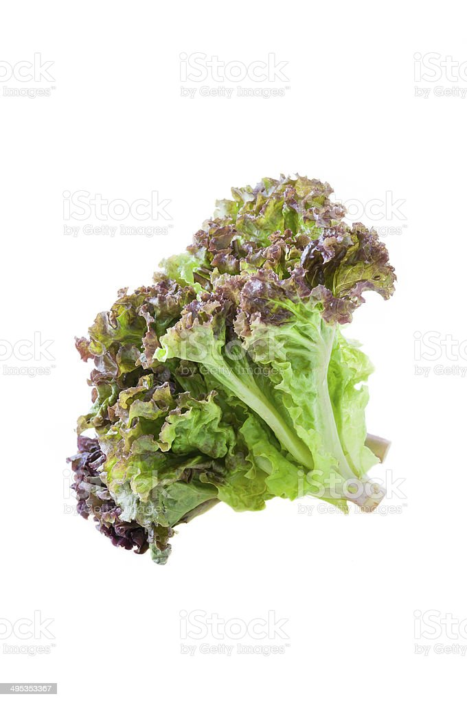 red lettuce leaves isolated on white background stock photo