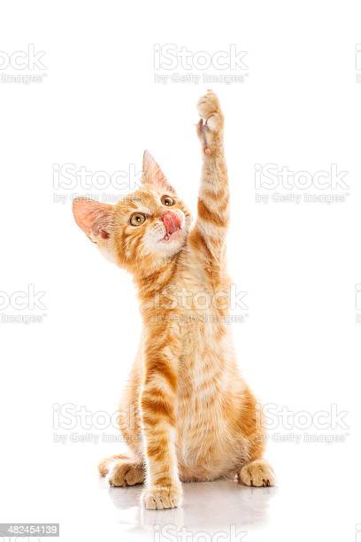 Red little cat picture id482454139?b=1&k=6&m=482454139&s=612x612&h=ui7qpgjkqvqmqsmm9chvnniunkq cdd9tcvhnzkbgzs=