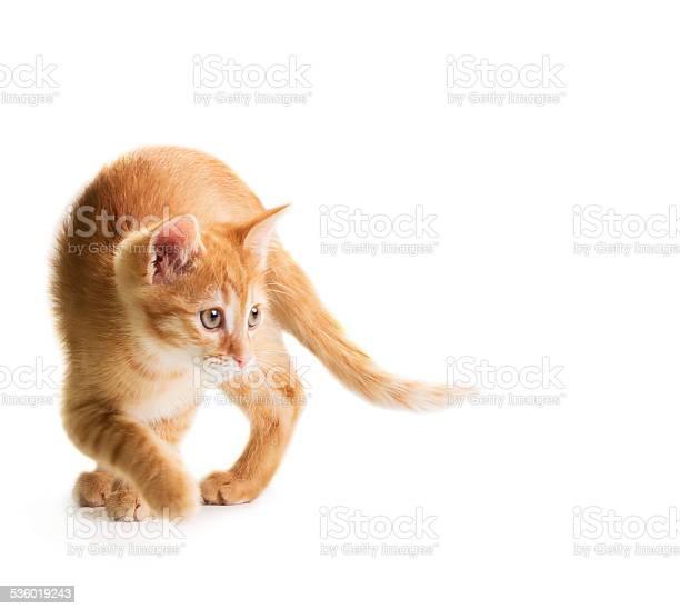 Red little cat picture id536019243?b=1&k=6&m=536019243&s=612x612&h=qylspjfs4lionorigprozqzheg2aqizvlws259y9zim=