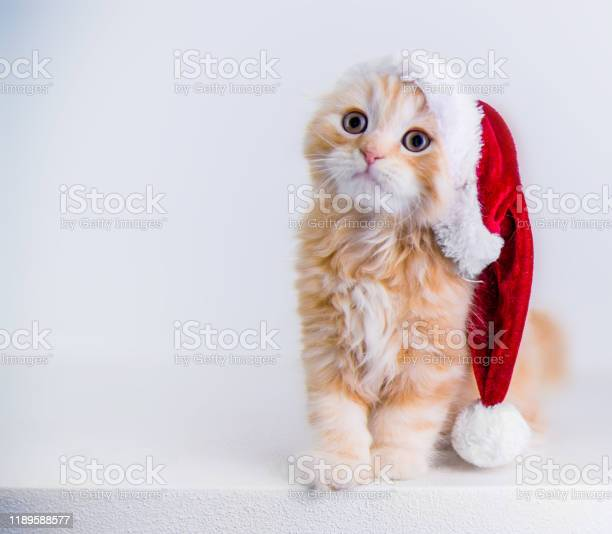 Red little cat wearing santas hat picture id1189588577?b=1&k=6&m=1189588577&s=612x612&h=gy5jdtii bpqi57mpv4 o4w28txi9ie07gvhx  ncpw=