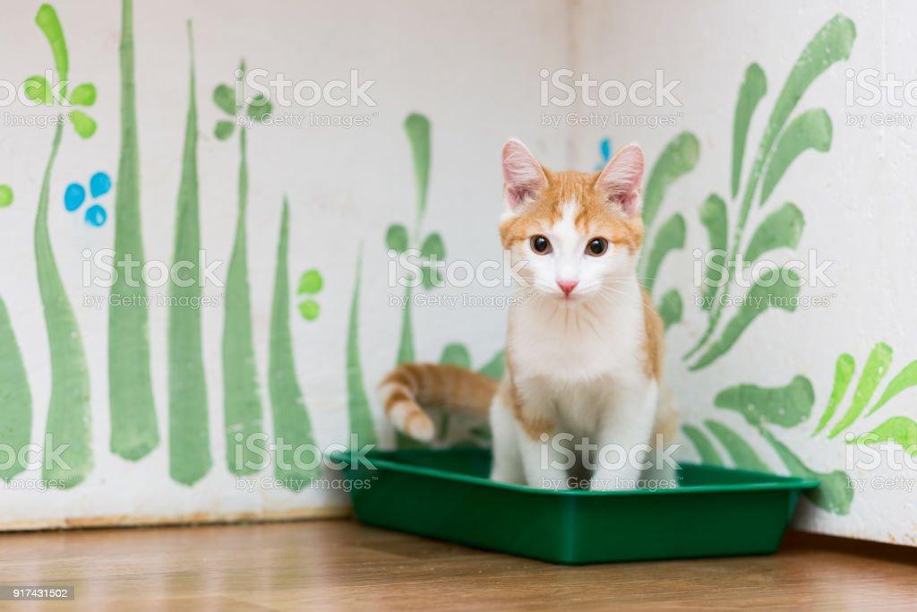 gatinho vermelho está sentado no vaso sanitário de um gato de cor verde - foto de acervo