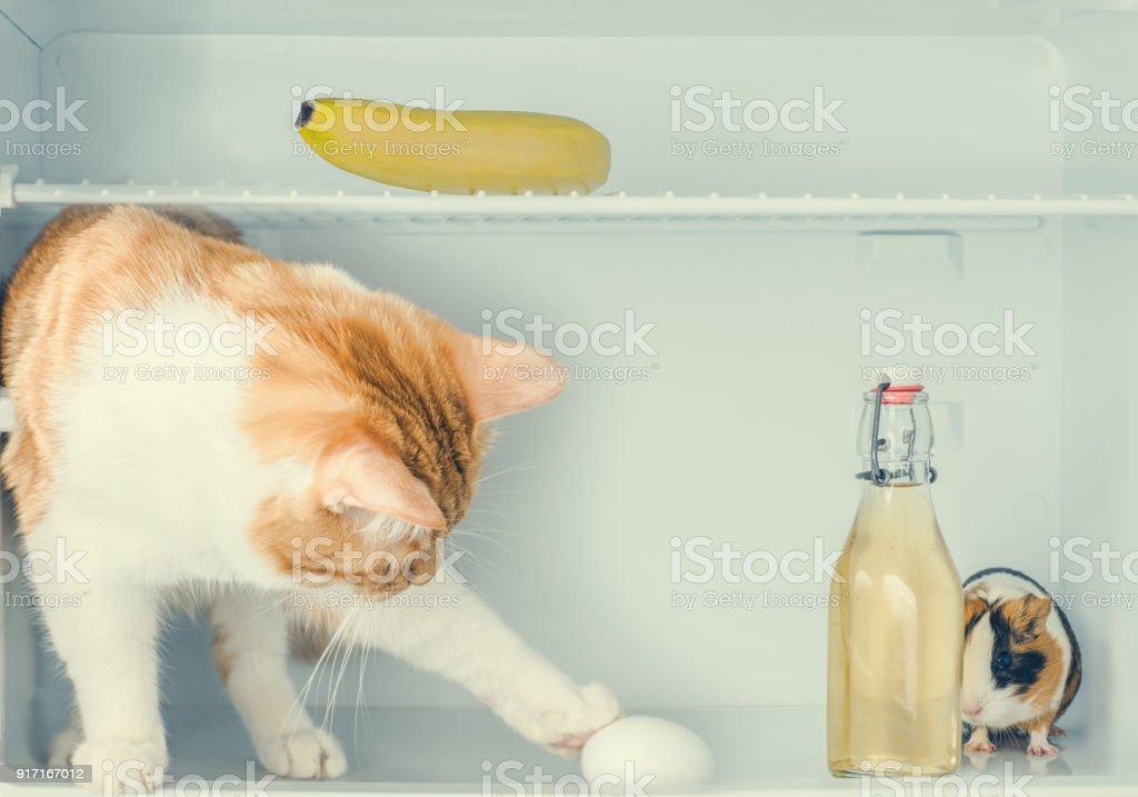 Kühlschrank Ei : Weiße eier aufgereiht im kühlschrank stockfoto bild